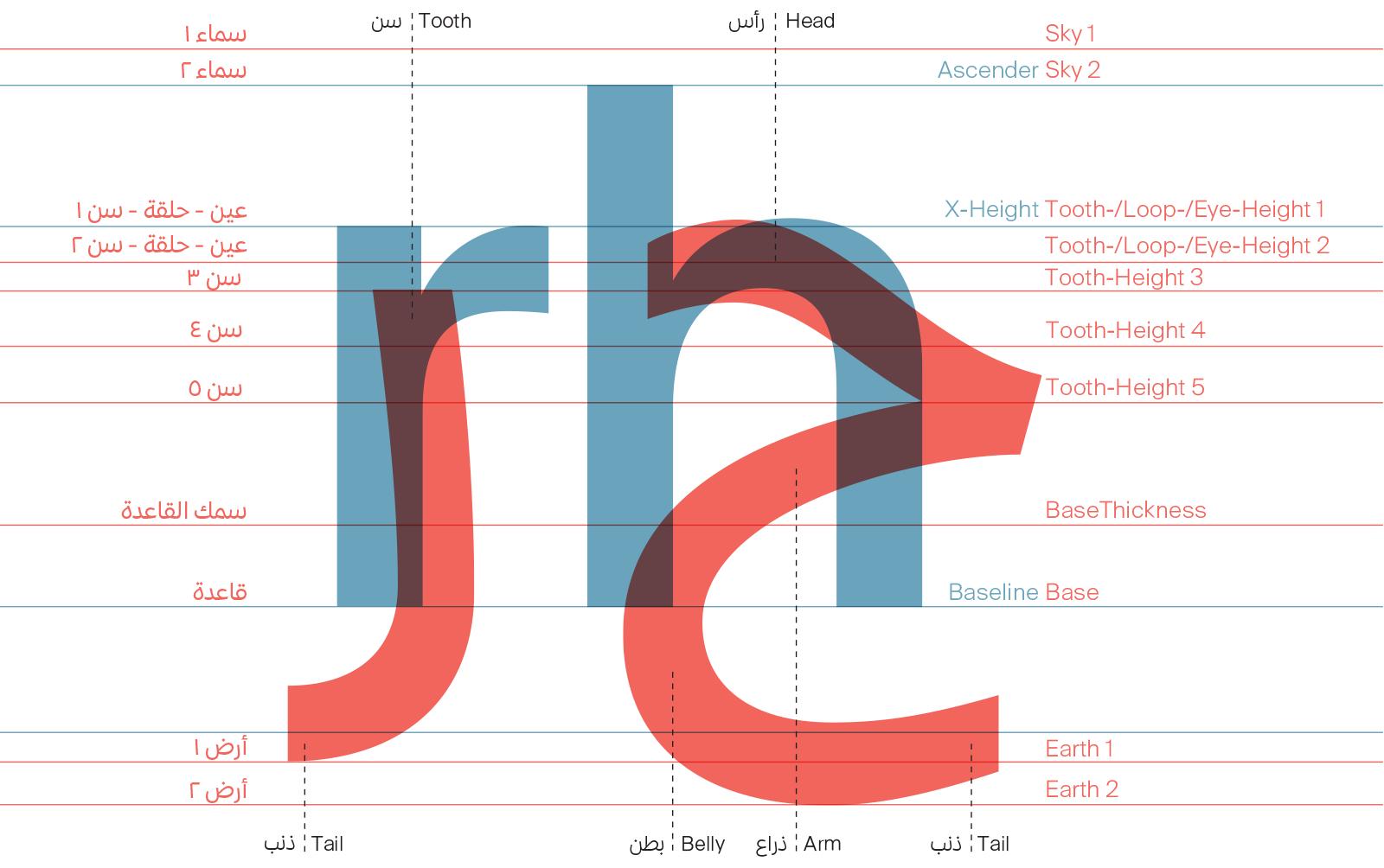 anatomy of type The anatomy of type in 60 seconds made by claire-ellen dath itamar toren.