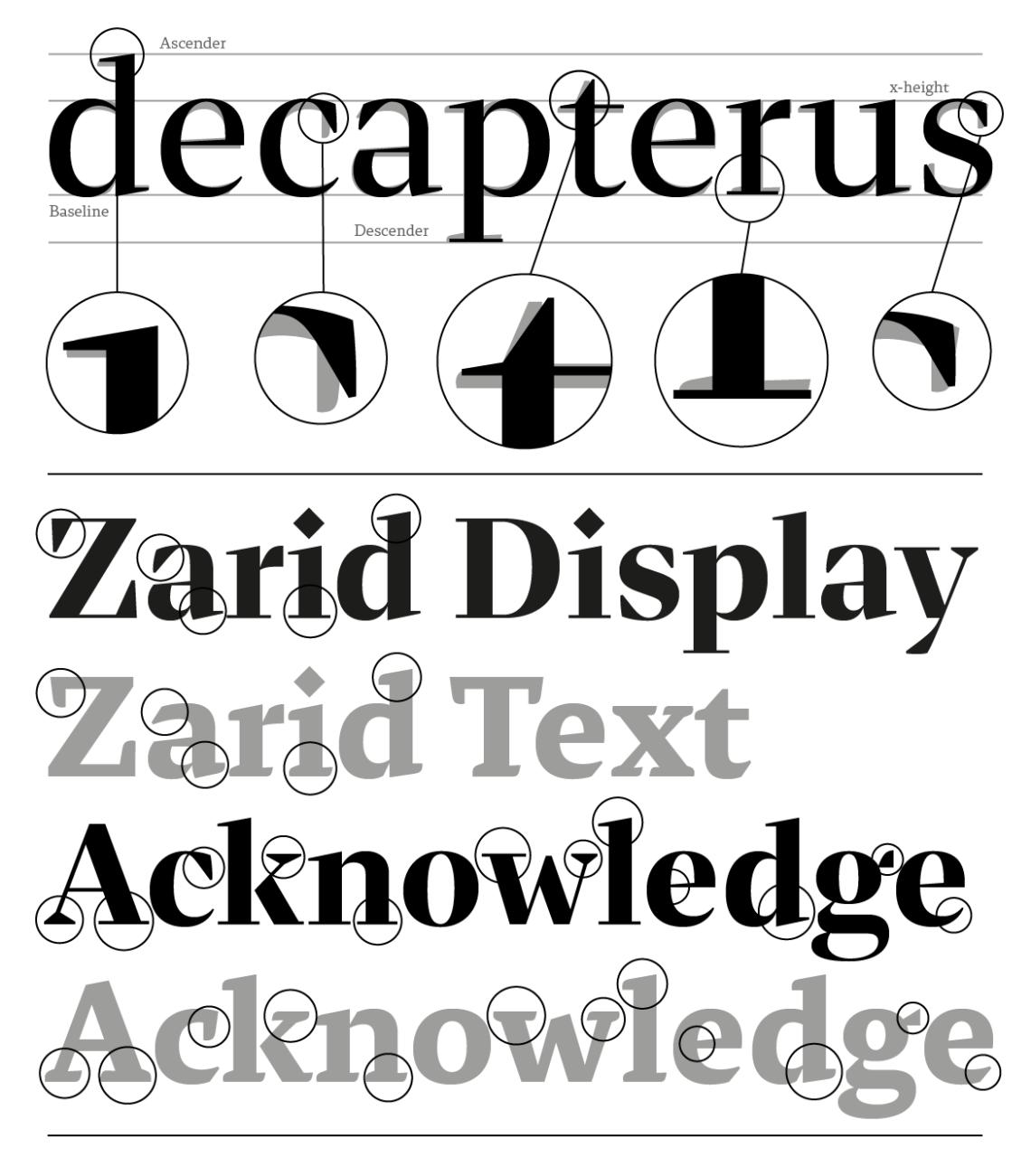 Zarid Display-8